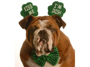 irish-pup