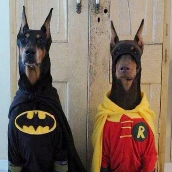 Dog Batman